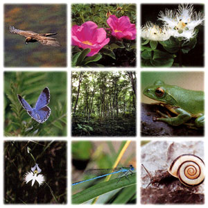 Homeopathy for animals and plants