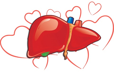 Your lovely Liver